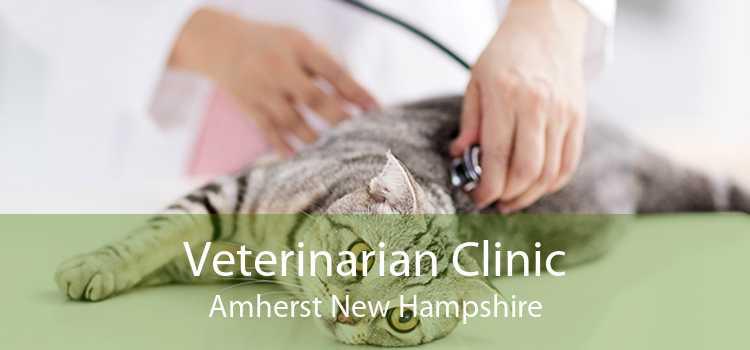 Veterinarian Clinic Amherst New Hampshire