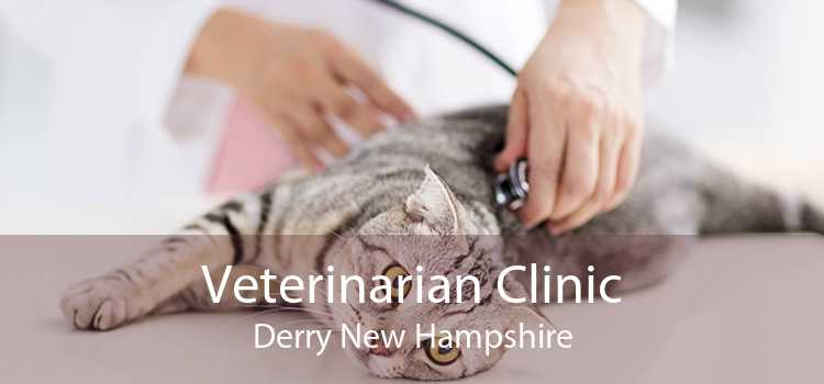 Veterinarian Clinic Derry New Hampshire