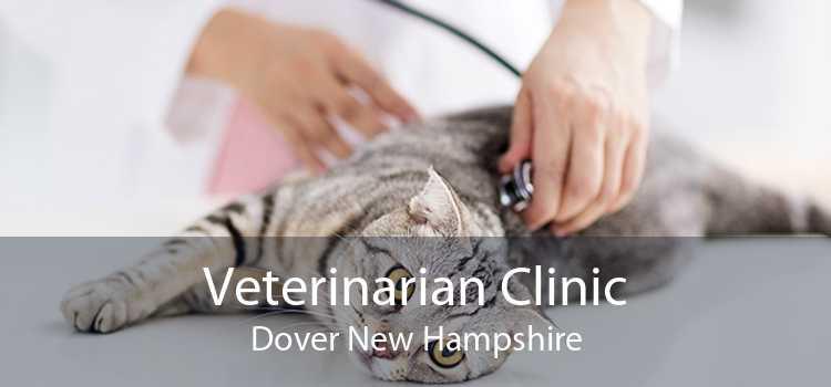 Veterinarian Clinic Dover New Hampshire