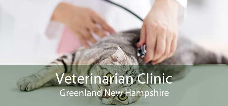 Veterinarian Clinic Greenland New Hampshire