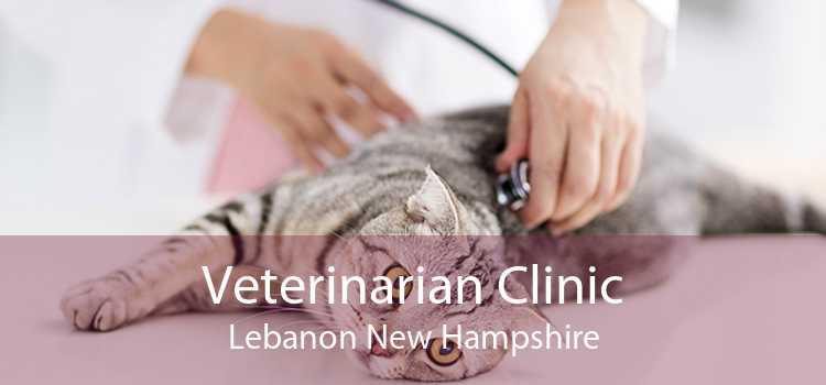 Veterinarian Clinic Lebanon New Hampshire
