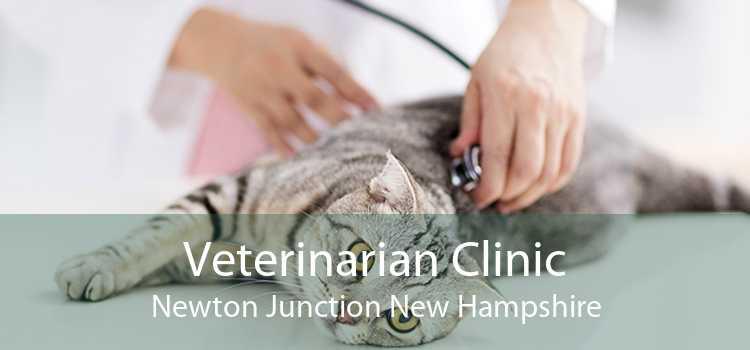 Veterinarian Clinic Newton Junction New Hampshire